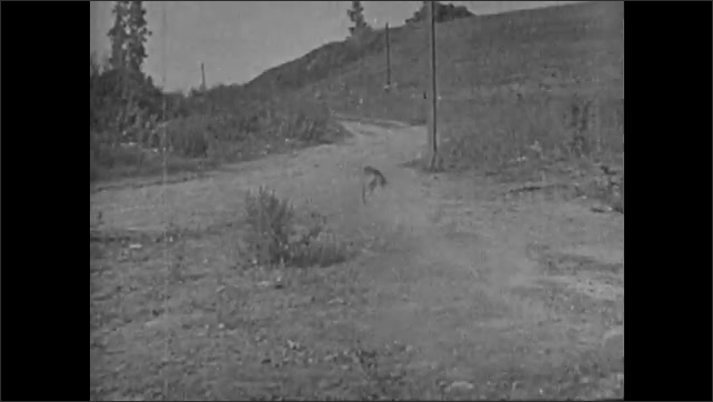 1940s: Man tries to jump into boat from dock but misses. Dog runs out of house with man and woman. Title card. Man and woman leave house. Dog running. Man and woman ride on bike. Speed boats in water.
