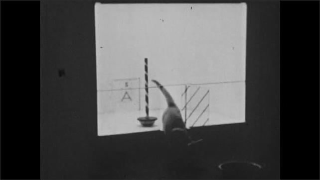 1930s: Container with pole, door ????A????opens, cat comes in slowly, smells pole, explores, touches pole with tail, door with strips opens, cat leaves. Door ????A????opens, cat comes in.