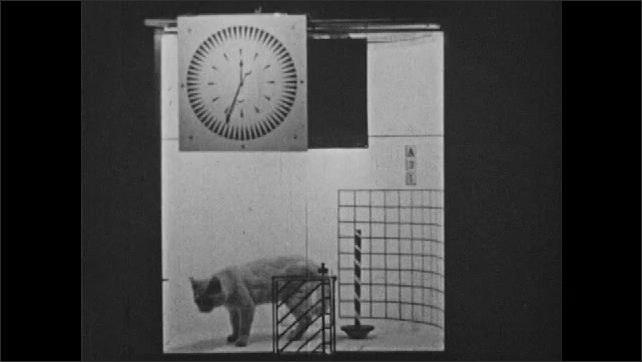1930s: Cat smells door with stripes, walks around a container with a timer, cat moves around agitated, tries to climb the glass, touches pole with its tail, door with stripes opens, cat leaves.