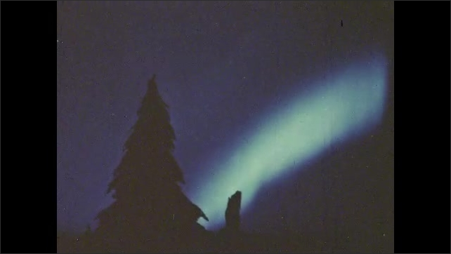 1980s: The Aurora Borealis or Northern Lights behind a pine tree on a hillside.