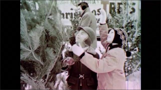 1950s: UNITED STATES: girl looks at needles on Christmas tree. Boy looks at spruce tree. Girl looks at pine tree. Family buy Christmas Tree.