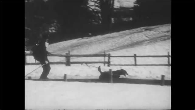1950s: Girl walks down path, man passes on skis with dog. Panning shot, dog pulls man on skis. Girl walks on path, pan to store.