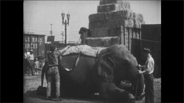 1950s: UNITED STATES: men clean elephant. Man puts circus blanket on elephant.