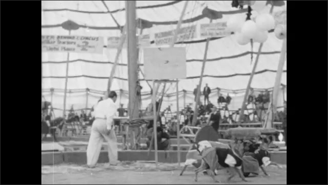 1940s: Handler conducts basketball playing dogs. Dogs bounce balloon near basket. Audience watches dogs bounce balloon at circus.