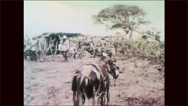 1960s: Shanty town near public housing complex. Wealthy buildings on hillside. Mule stands outside shanty. Woman holds infant and stirs pot. Women and children ride mules.