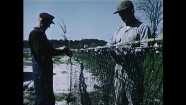 1950s: Men repair large fishing nets on shore. Men attach floats and sinkers to net. Men on boats attach large fishing net to wooden poles in Chesapeake Bay.