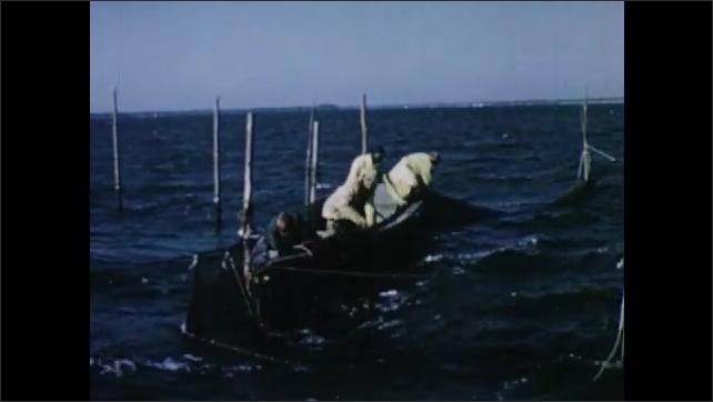 1950s: Men in skiff pull up net.