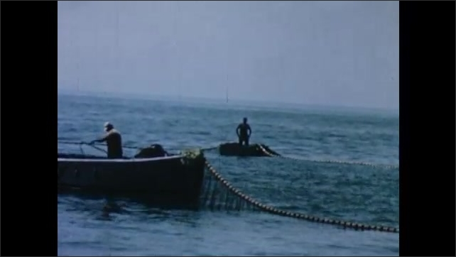 1950s: UNITED STATES: men pull in nets around shoal. Catch of fish inside net.