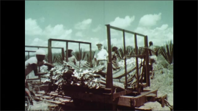 1960s: AFRICA: pineapples and sisal growing. Tropical coast and small holdings. Man works in forest.