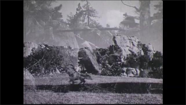 1940s: Native Americans on horseback ride across land. Men shoot rifles at Native Americans.