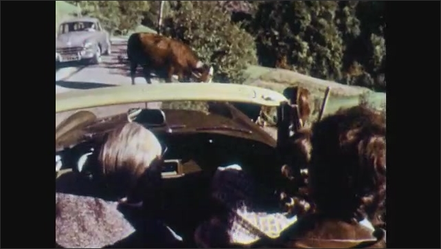 1960s: Two women and man in convertible car, talking, watching dog herd cattle down path. Man and two women in car drive away.
