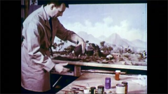 1950s: Artist puts down paintbrush, stands up, picks up model of dinosaur and places it in diorama.