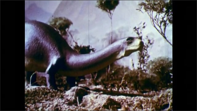 1950s: Hand places model of man next to model of brontosaurus.