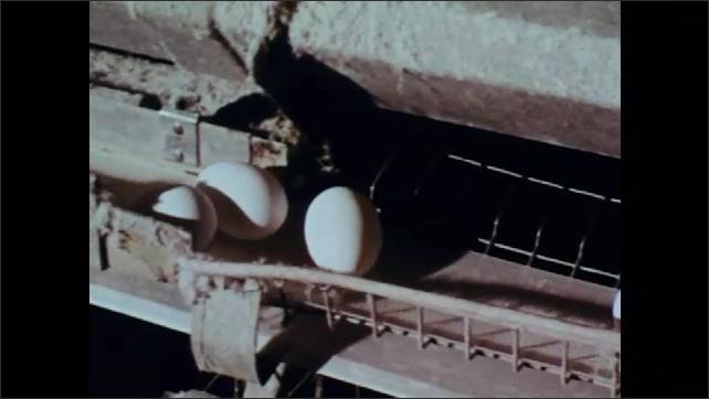 1970s: Office.  Man checks chart on bulletin board.  Eggs roll down conveyor belt.