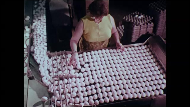 1970s: Woman sorts and moves eggs.