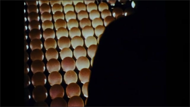 1970s: Eggs move along conveyor belt.  People sort and remove eggs.