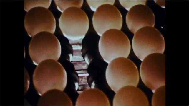 1970s: Eggs move along conveyor belt.  Man removes broken and cracked eggs.