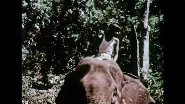 INDIA 1950s: Elephants in lumber camp / Man with elephant / Boy rides elephant / Views of elephant pulling log / Boy rides elephant.