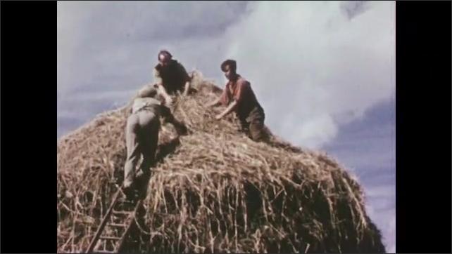 1950s: Men building haystack. Men add hay to stack. Close up of man. Men adding hay. Men on haystack.