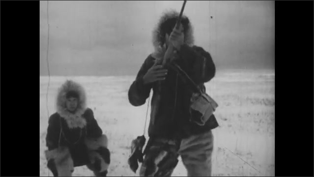 1940s: Man and boy stop walking, man gestures for boy to stay, man takes out rifle, aims, fires, shoots. Caribou run away. Man and boy walk up to dead caribou in snow.