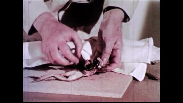 1960s: Man holds open dissected shark body, showing where kidneys are located. Man covers shark with white sheet. Man produces dissected frog and handles various organs.