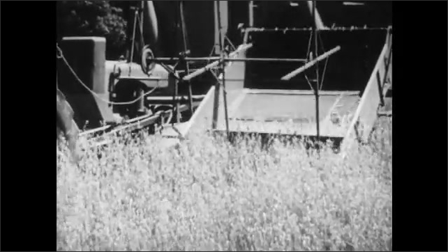 1950s: Tilt down field of oats. Low angle view of oats waving. Combine drives through field. Man stops tractor, gets off, boy runs to tractor.