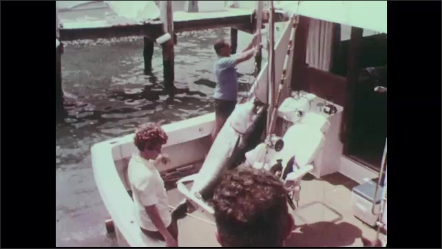 1960s: Woman stands on back of boat and watches man lift tuna using pulley. Dog wanders around boat. Men on dock lift tuna up on string at weigh station.