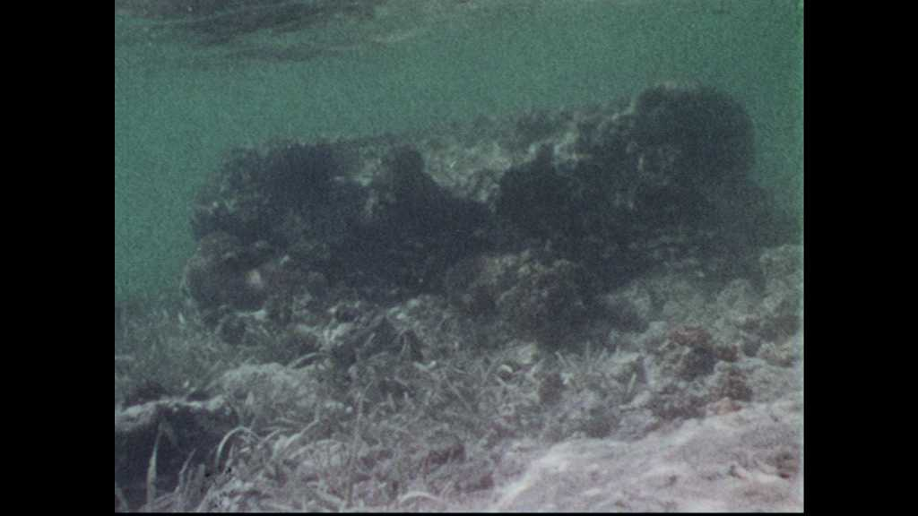 1960s: Underwater footage of coral reefs, fish and starfish. Schlitz can in the seabed.