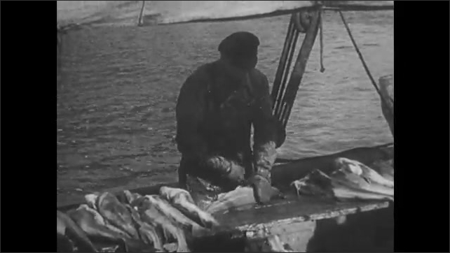 1940s: Men toss cod fish onto hanging scale. Man cleans and debones cod on ship.