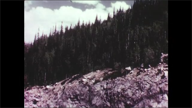 1950s: Tree with exposed roots. Uprooted tree lays on ground. Trees on mountainside. Large mountain with snow caps.