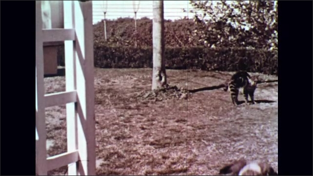 UNITED STATES 1950s : Dog Chases Dog Up a Tree