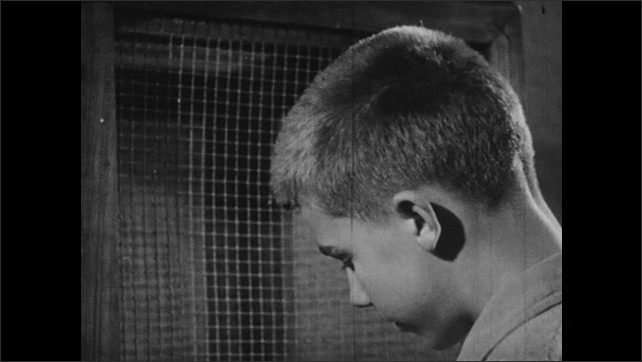 UNITED STATES 1940s: Group of rats / Boys put rats in cages / Close up of boy / Rats in cage.