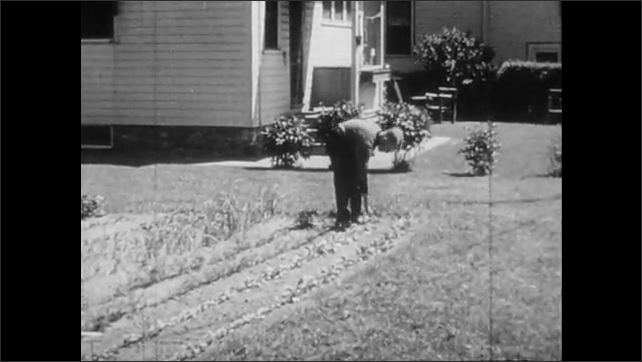 1940s: UNITED STATES: boy waters garden with hose. Boy pulls up crop of radishes.  Radishes in hand