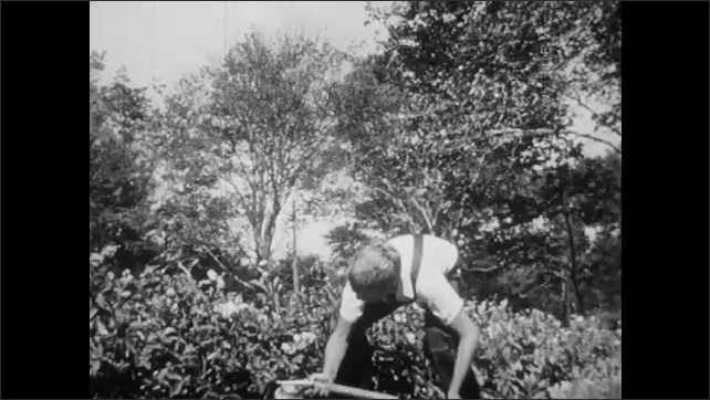 1940s: UNITED STATES: boy sprays potato plants with pesticide. Girl picks carrots from ground