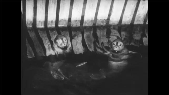 1950s: Seal in water enclosure. Two seals in fenced-in pool. Seals turn flips in water. Seals tread water.