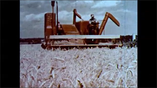 1960s: Man on horse herding cattle. Man driving farming equipment through field. Sprinklers spraying field.