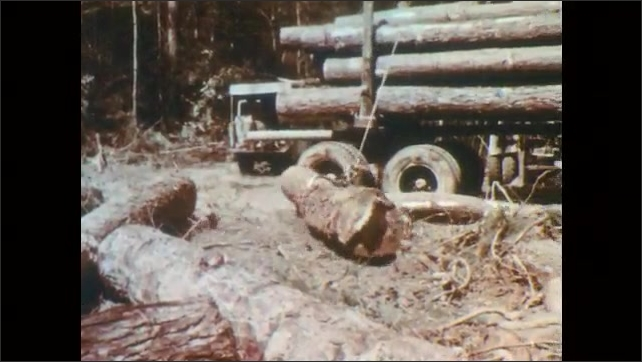 1960s: Saw cutting through log, tilt up to man cutting. Man clamps hook onto log. Man pulls up wire. Wires pull log. Man waves arms. Man lifts log onto truck.