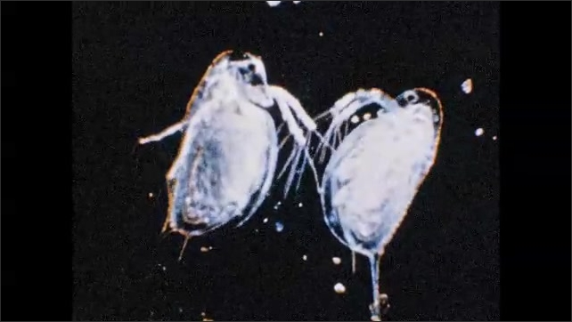 1950s: Microscopic organisms move around in water.