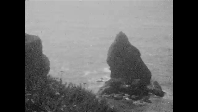 1930s: UNITED STATES: girl stands by tree trunks. View through rocks towards sea. Edge of water