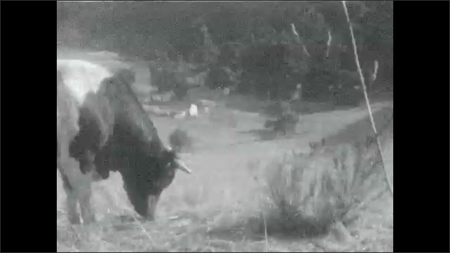 1930s: Mountains.  Bull in pen.  Little girl jumps up and down.  Father and daughter walk together.