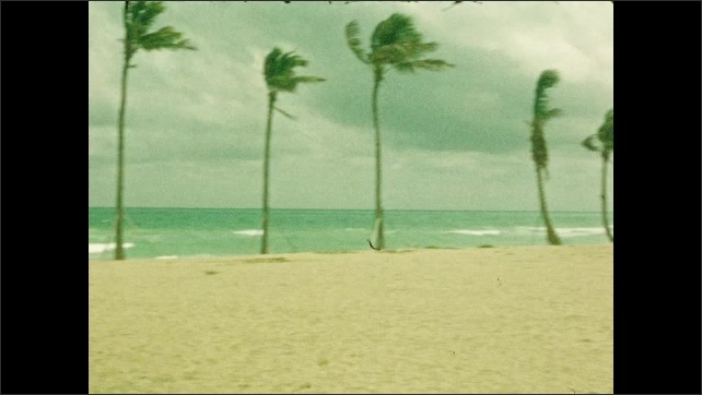 1940s: Men and women walk toward ocean on beach. Palms sway in wind on beach. Palm trees and hotel on beach.