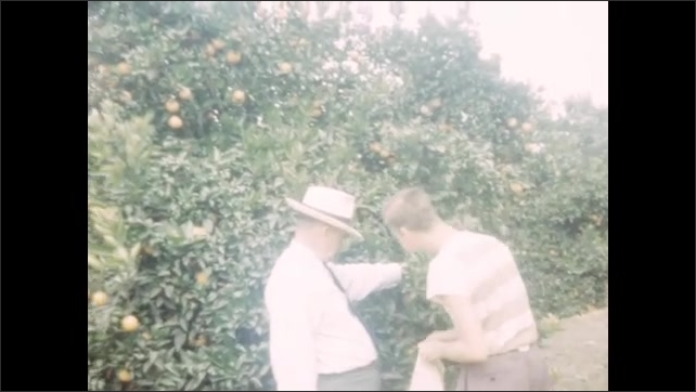 1940s: Workers operate oil derrick. Man holds tree branches back while man picks oranges.