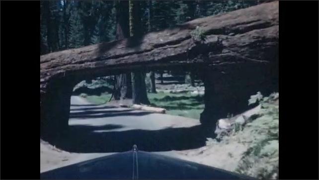 1940s: Deer walks through forest. Car drives under tree. Car drives through woods.