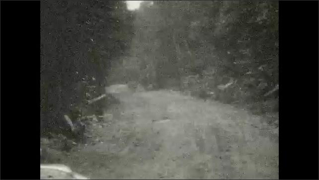 1920s: UNITED STATES: view through trees in valley. Bear cub on rocks. View of track through woods.