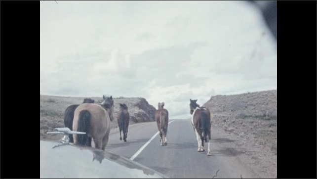 1940s: Car drives down desert road. Car pauses at road sign. Car drives up a desert road. Horses are herded on to road by cowboys.