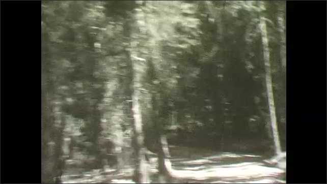 1930s: Forest trail through tall trees, logs on path. Small trees and shrubs on trail. Curving on narrow forest trails.