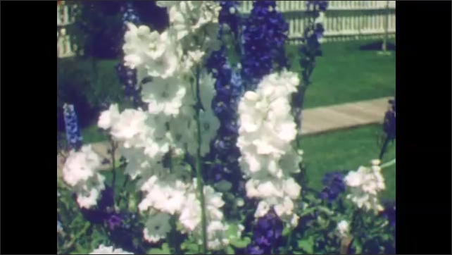 1940s: Old House, garden with colorful flowers, white picket fence, small mountain town. Blue larkspurs. Log cabin.