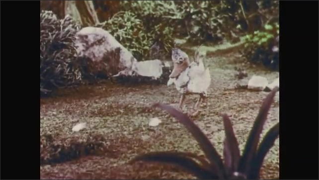1950s: Stop-motion animation.  Boy tears off pieces of bread and throws to ground.  Children smile.  Boy gestures to ground.  Children look shocked as bird eats bread crumbs.  Bird flaps wings.