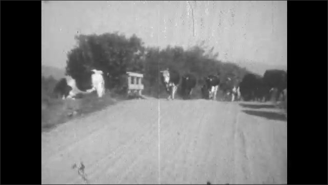 1930s: cars drive around main street of town with awning for Florence in Montana. cows and cowboys on horses cover country road near fences.