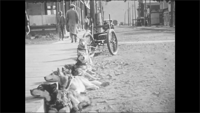 1930s: A team of dogs and a cart lined up along a wooden sidewalk on a dirt road. A boy reaches down and pets one.